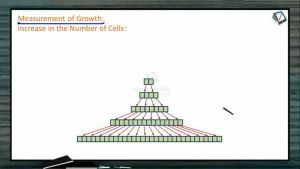 Plant Growth And Development - Measurement Of Growth (Session 1)