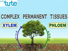 Class 9 Biology - Plant Tissues - Complex Permanent Tissues Video by Let's tute