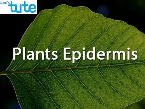 Class 9 Biology - Plants Epidermis Video by Let's tute
