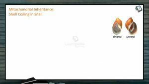 Principles of Inheritance And Variation - Mitochondrial Inheritance (Session 10)