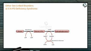 Principles of Inheritance And Variation - Other Sex Linked Disorders (Session 11)