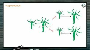 Reproduction In Organisms - Advantages And Disadvantages Of Asexual Reproduction (Session 1)