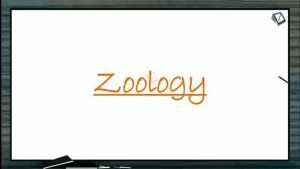 Reproduction In Organisms - Female Reproduction System And Ovary (Session 5)