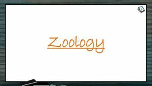 Reproduction In Organisms - Introduction And Life Span Of Different Organisms (Session 1)