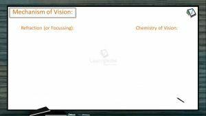 Sensory System - Mechanism Of Vision (Session 1)