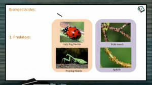 Strategies For Enhancement in Food Production - Bioinsecticides (Session 6)