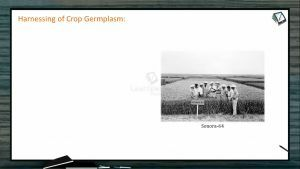 Strategies For Enhancement in Food Production - Harnessing Of Crop Germplasm (Session 4)
