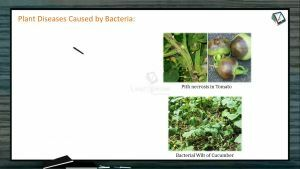 Strategies For Enhancement in Food Production - Plant Diseases Caused By Bacteria (Session 3)