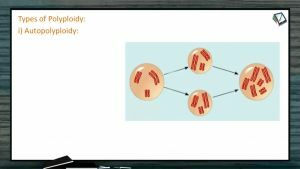 Strategies For Enhancement in Food Production - Types Of Polyploidy (Session 1)
